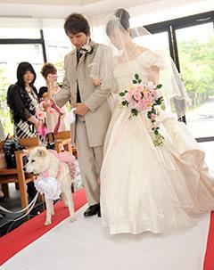 わんちゃんと一緒に結婚式